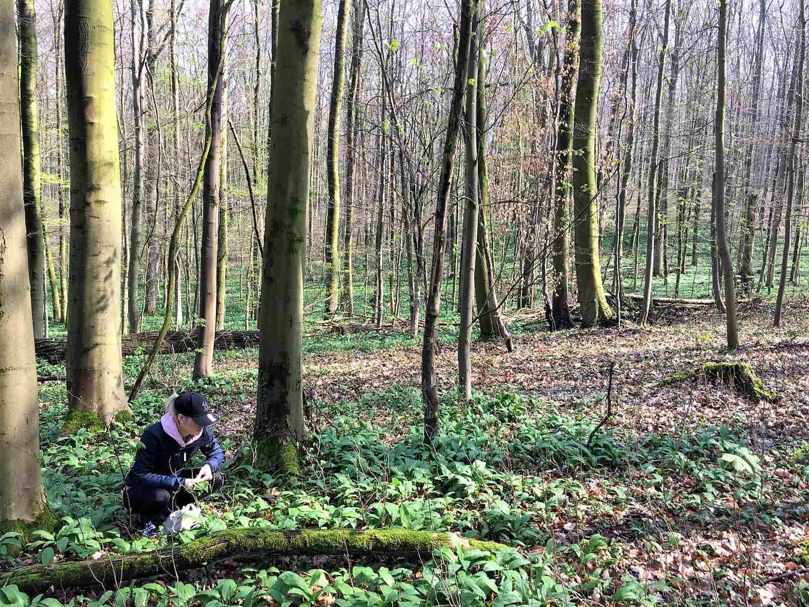 Marleen beim Bärlauch-Sammeln im Wald
