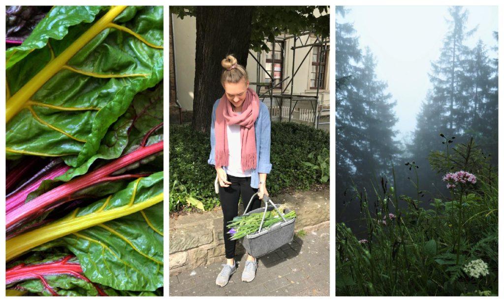 Drei Bilder: Mangold, Marleen, Wildblumen